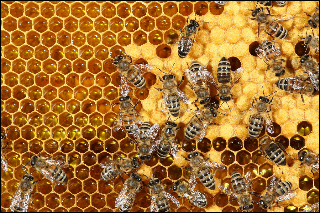 bees-making-honey